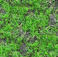 Wild grass 17