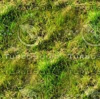 Wild grass 23