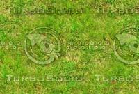 Wild grass 13