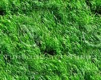 Wild grass 14
