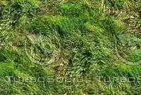 Wild grass 24