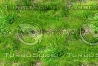 Wild grass 21