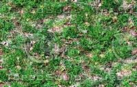 Wild grass 9