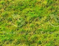 Wild grass 15