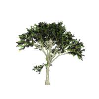 tree 3d ma