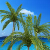 3d coconut palms 01 model