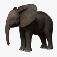 3d african elephant baby rigged