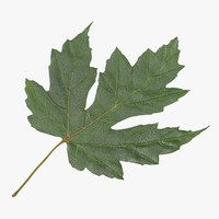 green maple leaf 01 3d max