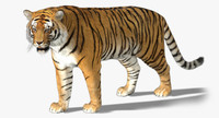 tiger rigged fur 3d model