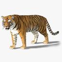 Tiger 3D models