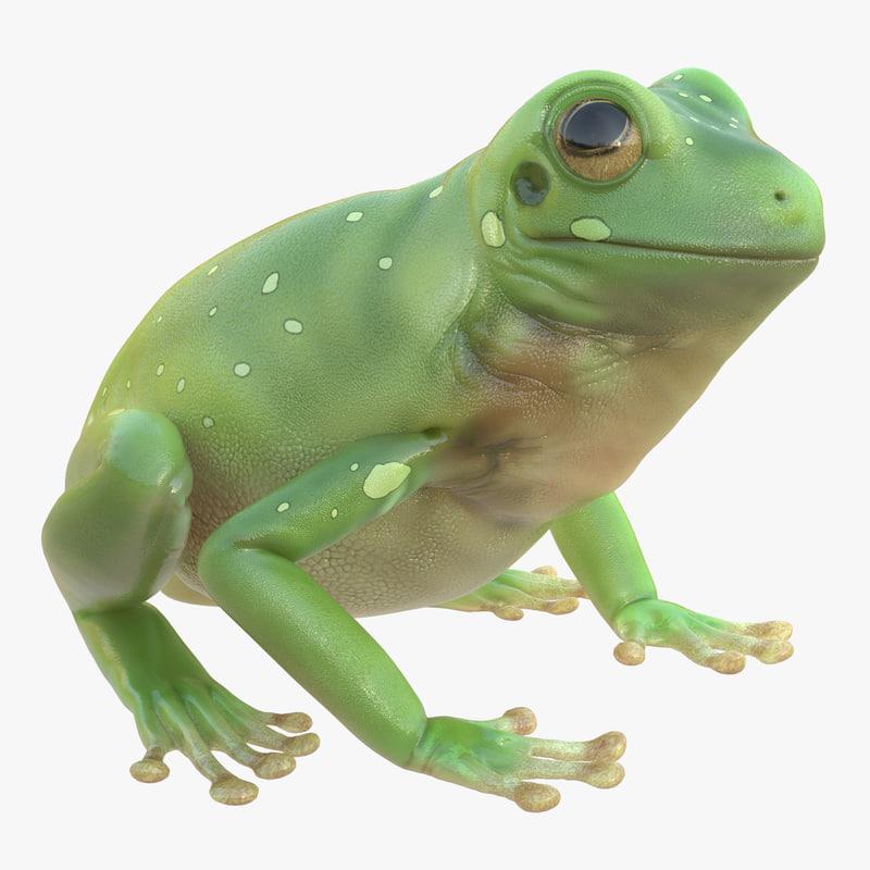 Australian Green Tree_Frog 3d model 00.jpg