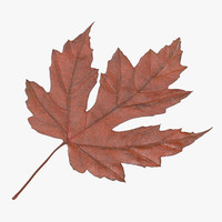3d orange maple leaf model