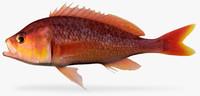 3d threadfin bass model