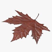 brown maple leaf 02 3d max