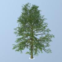 blackgum tree max
