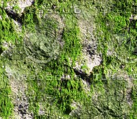 Mossy rock 30
