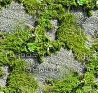 Mossy rock 11