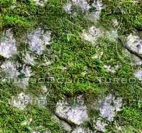 Mossy rock 23