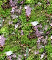 Mossy rock 14