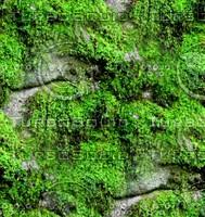 Mossy rock 18