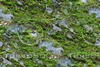 Mossy rock 5