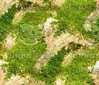 Mossy rock 22