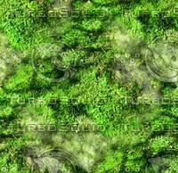 Mossy rock 40