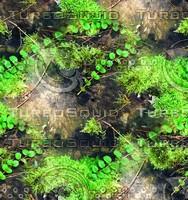 Mossy rock 36