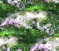 Mossy rock 37