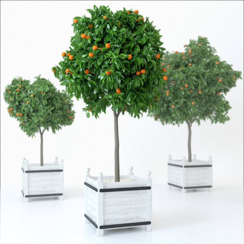 mandarin_tree_preview_01.jpg