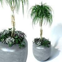 max realistic palm