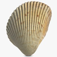 seashell 16 3d 3ds