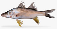 3d yellowfin snook model