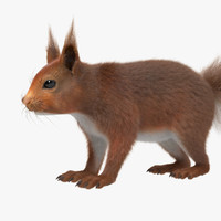 3d model squirrel red fur