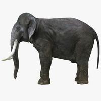 3d elephant real zbrush