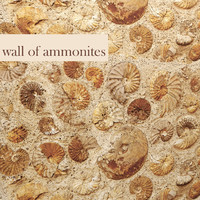 max wall ammonites