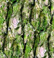 Mossy tree bark 2