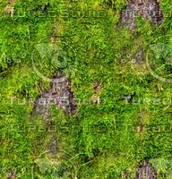 Mossy tree bark 5