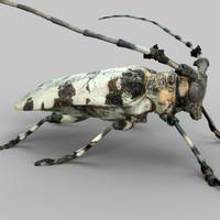 3ds max boktor beetle