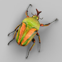 photorealistic beetle obj
