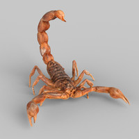 3d scorpion scanned