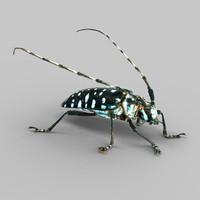 3d model calloplophora sollii beetle