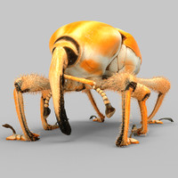 3d poteriophorus monilifasciatus beetle model