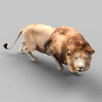 panthera lion 3d obj