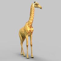 Giraffe Realistic
