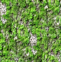Mossy tree bark 29