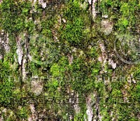 Mossy tree bark 35