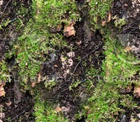 Mossy tree bark 27
