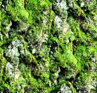 Mossy tree bark 39