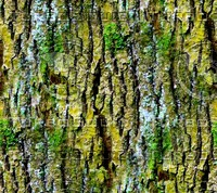Mossy tree bark 30